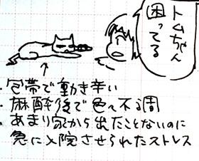 2y4mg.jpg